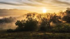 morning fog (aidong_ning) Tags: sunrise morningfog trees