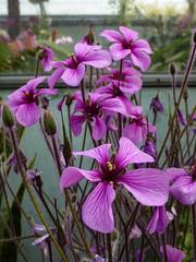 The Glasshouse (Steve Taylor (Photography)) Tags: glasshouse green purple glass uk gb england greatbritain unitedkingdom plant flower flora greenhouse