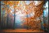 Herbstmorgen im Serrahn (NPPhotographie) Tags: serrahn nature art creative oberberg magic magical tree wood forest fog mist dust autumn fall elitegalleryaoi bestcapturesaoi