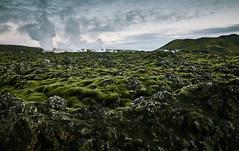 Geothermal Power Plants (bacon.dumpling) Tags: cloudy dusk energy field landscape moss nikond750 nopeople nobody outdoor powerplant renewableenergy rock scenic sigma24mmf14dghsmart sky steam volcaniclandscape neargrindavík iceland