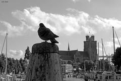 Half Past Seven (Eddy Allart) Tags: kerk duif haven dordrecht grote happy new year
