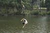 Falling ((arteliz)) Tags: bushdiscoverywalk gembrook melbourne gembrookbushlandpark walkabouteducation arteliz artelizphotography australia adventure exploring tarzanrope boy falling swing swim swimming gembrookbeach