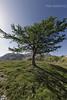paesaggio di montagna, mountain landscape (paolo.gislimberti) Tags: paesaggi landscapes alberi trees conifers conifere controluce backlighting prateriaalpina alpinegrassland