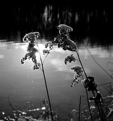 2017_01_15_15_12_25_pic (marcolindermeier) Tags: refelection sun winter snow lake natur