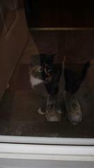 16 (EmmaTaylor•) Tags: poptart cat canon 365 24mm meow kitten cutie