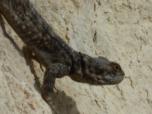 Uzuncaburc big lizard