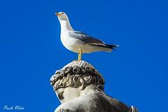 Strane idee - Strange ideas (Pablos55) Tags: gabbiano uccello testa statua blu seagull bird head statue blue