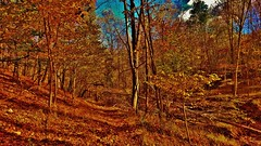Daniels Autumn Forest (matthewbeziat) Tags: patapscovalleystatepark daniels danielsarea danielsmaryland howardcounty marylandforests americanforests forest autumnfoliage autumn fallscenes fall