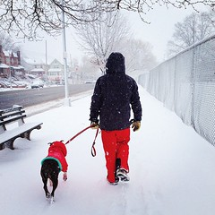 snow dog cute cold awesome friends partners pastoral wintry freezing tranquil friend friendship colorful walk besties peaceful boring winter artic walking serenity happy numbing red snowy companionship companion pet season dogwalk dogwalker dogwalkingbusiness petsitting petsittingbusiness vet verinarian pethospital therapydog dogwalking walkdog walkthedog leash petclothing hoodie hood petrescue dogrescue shelter dogshelter animalshelter humanesociety dogsnow walkdogsnow petbusiness doggydaycare dogdaycare dogbusiness active activity activewinter outdoor outdoors outside out fence dogcare care animalcare designerdog dogclothes petclothes petstore petstyle exercise