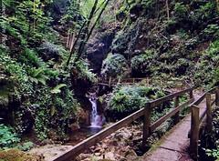 Parco delle Fucine di Casto (IVAN 63) Tags: verde selva natura piante brescia lombardia bosco foresta casto vallesabbia ferratedicasto parcodellefucinedicasto