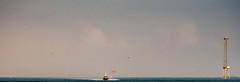 "Charleston Harbor: Reclaimed with ""Dehaze"" (Laurie-B) Tags: usa sc america us spring unitedstatesofamerica north southcarolina charleston american northamerica livingthings 2014 northamerican 2015 dpca magnoliaplantationsandgardens eukaryotaempire"