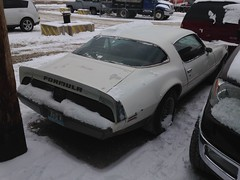 "1979 Pontiac Firebird • <a style=""font-size:0.8em;"" href=""http://www.flickr.com/photos/85572005@N00/19117220248/"" target=""_blank"">View on Flickr</a>"