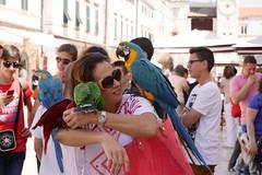 'Pirate's' parrots, Dubrovnik (jozioau) Tags: dubrovnik parrots variosonnart282470