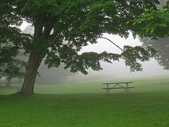 Tree and picnic table (Mysophie08) Tags: tree fog vermont campground infocus highquality challengeyouwinner thechallengefactory