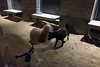 washington square park dog run (Charley Lhasa) Tags: fujifilmx70 fujifilm x70 185mm iso6400 ¹⁄₃₅secatf28 0ev aperturepriority pattern noflash dsf3664 raw uncropped taken161207182842 uploaded161210015631 3stars flagged adobelightroomcc20158 lightroomcc20158 adobelightroom lightroom charley charleylhasa lhasaapso dog dogs night evening washingtonsquareparkdogrun dogrun bigdogrun washingtonsquarepark wsp nycparks citypark urbanpark greenwichvillage manhattan newyorkcity nyc newyork ny tumblr161209 httpstmblrcozpjiby2fho5tq