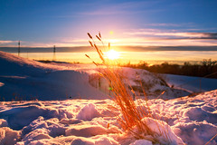 Wheat In Snow (Bluesky251) Tags: blue