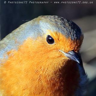 2308 Robin
