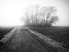 Chemin dans le brouillard. (steph20_2) Tags: panasonic lumix m43 714 campagne gh3 countryside chemin brouillard brume oise picardie monochrome monochrom noir noiretblanc ngc blanc black bw white skanchelli paysage