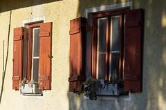 20161207-104229 (Ernst_P.) Tags: 135mm architektur aut botanischergarten fenster haus innsbruck österreich samyang tirol walimex windows ventana window