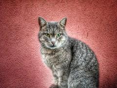 kedi cat (ercanpolat) Tags: animal cat flickr red kedi friend pet