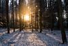DSC_1033-2 (K 3 N N Y) Tags: nikon d500 eifel schnee snow hohe acht