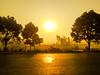 Golden Morning-1066 (Rajjib's Photo) Tags: morning nature sun road tree leaf street people vihecle sunrise life goldenmorning van transportation transport