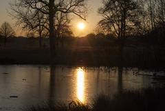 Richmond Park, London (Tiphaine Rolland) Tags: richmond richmondpark london londres parc park nikond3000 d3000 nikon winter hiver sunset coucherdesoleil arbres trees soleil sun water eau pond étang