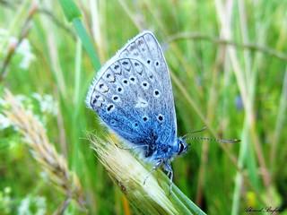 Butterfly 1137
