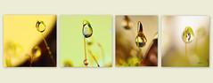 mousse de puits (AND HL) Tags: nature mousse gouttelettes macro nikon