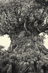 Tree of Life - Animal Kingdom (fisherbray) Tags: fisherbray usa unitedstates florida orangecounty orlando baylake disney waltdisneyworld wdw disneyworld nikon d5000 animalkingdom themepark treeoflife monochrome bw silverefexpro