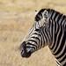 DSC09516 - NAMIBIA 2013