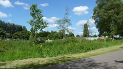 June 10th, 2015  Next to the car park (karenblakeman) Tags: uk trees plants june clouds wildflowers carpark footpath caversham 2015 hillsmeadow