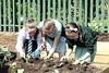 Community gardens (belfastcitycouncil) Tags: communitygarden lowerfalls divis outdoorgarden stjosephsprimaryschool