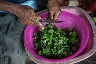 Preparing slippery cabbage ready for cooking, One' Oneabu, Solomon Islands. Photo by Filip Milovac.