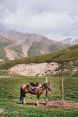 Waiting for travels | Kyrgyzstan (ReinierVanOorsouw) Tags: horses horse animal canon travels asia wanderlust adventure explore 5d canon5d kyrgyz centralasia kyrgyzstan asya paard photographytrip azië stans 2015 travelphotography kyrgyzrepublic beyondborders kirghizistan kirgistan jailoo kirgizistan canontravel kirgizië kirgisistan kirgizie 吉爾吉斯 kirgisia quirguistão кыргызстан кыргызреспубликасы 吉尔吉斯斯坦 5dmarkii jayloo キルギスタン centraalazië remotetravel kyrgyzstán beyondbordersmedia kõrgõzstan киргизи قرغزستان yayloo