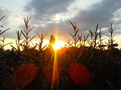 Tramonto (fotokoci) Tags: photo foto image background web free images cc creativecommons use download gratis libre publicdomain highquality  norightsreserved copyrightfree nocopyright wtfpl cc0 dominiopubblico