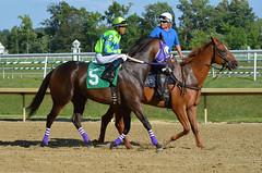 "2015-07-31 (41) r5 Victor Carrasco on #5 Olga Payne (JLeeFleenor) Tags: photos photography md marylandracing marylandhorseracing laurelpark jockey جُوكِي ""赛马骑师"" jinete ""競馬騎手"" dżokej jocheu คนขี่ม้าแข่ง jóquei žokej kilparatsastaja rennreiter fantino ""경마 기수"" жокей jokey người horses thoroughbreds equine equestrian cheval cavalo cavallo cavall caballo pferd paard perd hevonen hest hestur cal kon konj beygir capall ceffyl cuddy yarraman faras alogo soos kuda uma pfeerd koin حصان кон 马 häst άλογο סוס घोड़ा 馬 koń лошадь maryland"