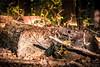 Wood Logs (Mit Desai) Tags: wood camping nature beautiful beauty warm logs indiana ridge hardin vinyetting