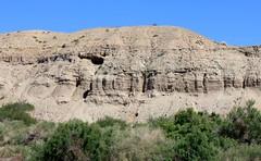 IMG_0159.jpg (DrPKHouse) Tags: arizona unitedstates loco bullhead ehrenberg