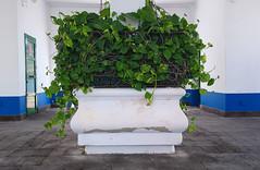 (Mateusz Mathi) Tags: summer green de puerto spain mini lg gran g2 canaria mogan mateusz 2015 mogn mathi hiszpania wyspy kanaryjskie