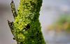Lichen & Moss Tree Trunk (Orbmiser) Tags: 55200vr d90 nikon oregon portland winter tree trunk moss lichen
