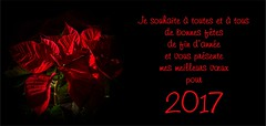 voeux 2017 (jemazzia) Tags: inside red flower rouge fleur fondnoir voeux wishes