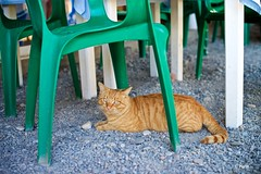 Kitty (Kym.) Tags: almuñécar andalucía andalusia cat chair day3 green kitty otherpeoplesgang spain