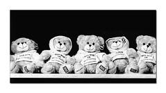 I Was Won (hehaden) Tags: bear teddybear toy prize shelf row pier brightonpier palacepier brighton sussex mono monochrome