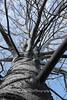 Oldalágak (Pauer Art Photography) Tags: tree trunk bole bought offshot family ancestry familytree pedigree
