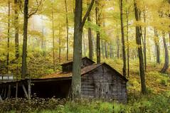 Sugar House (grbenson3) Tags: autumncolors vermont sugarhouse mendon maple trees autumn mist sugarmaple golden