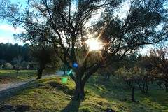 Ymittos in winter (BaraWalker) Tags: athens greece ymittos winter nature landscape tree sun mountain freezing