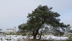 P1180027-7.jpg (loenatik) Tags: assel gelderland kootwijk nature nederland radiokootwijk sneeuw snow tree winter sky