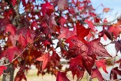 01 (AdrianSanzBer) Tags: nature naturaleza madrid parque otoño autumn hojas leaves trees