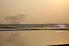 I heard a murmering.... (PawL23) Tags: thailand petchaburi salt saltfields birds reflection silhouette unseenasia aasia earthasia 100v10f